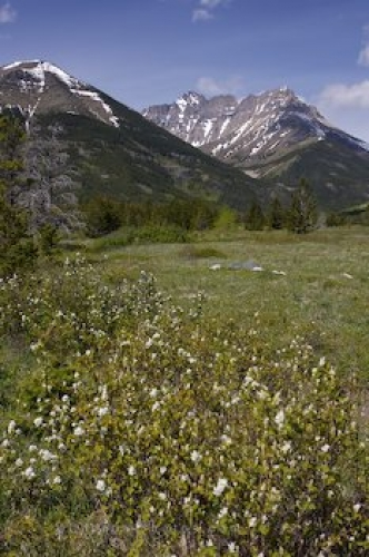 mountain-meadows_842-836