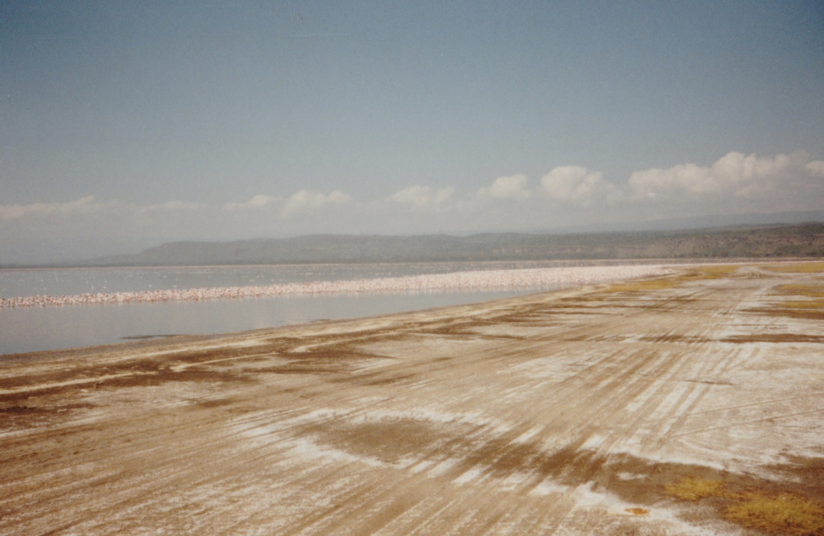 Flamingoes at Lake Nakuru, Kenya.